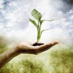 naturopathic healt